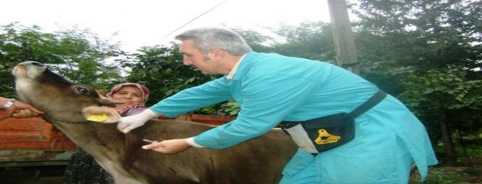 21 bin 748 hayvana aşı yapıldı