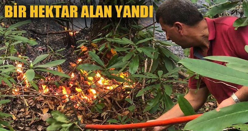 Akçakoca Kurugöl köyünde orman yangını!