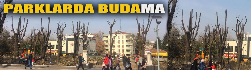 Ağaçlar budandı vatandaş uyarılara aldırmadı