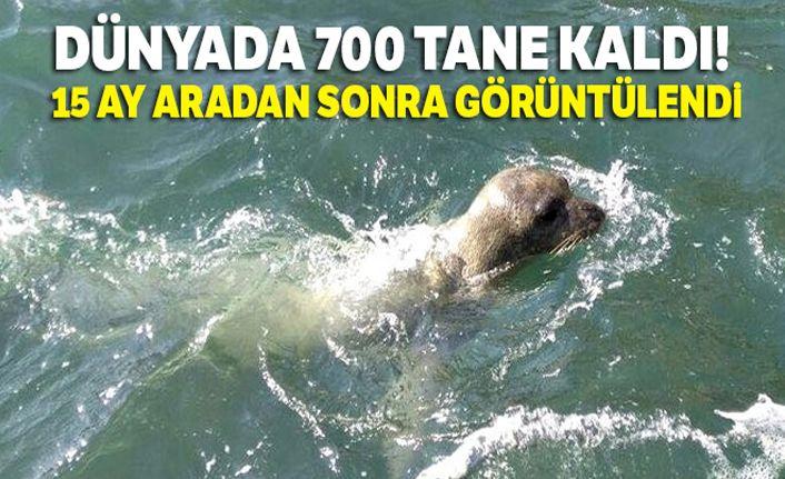Dünyada 700 tane kaldı! Kuşadası'nda 15 ay aradan sonra görüntülendi