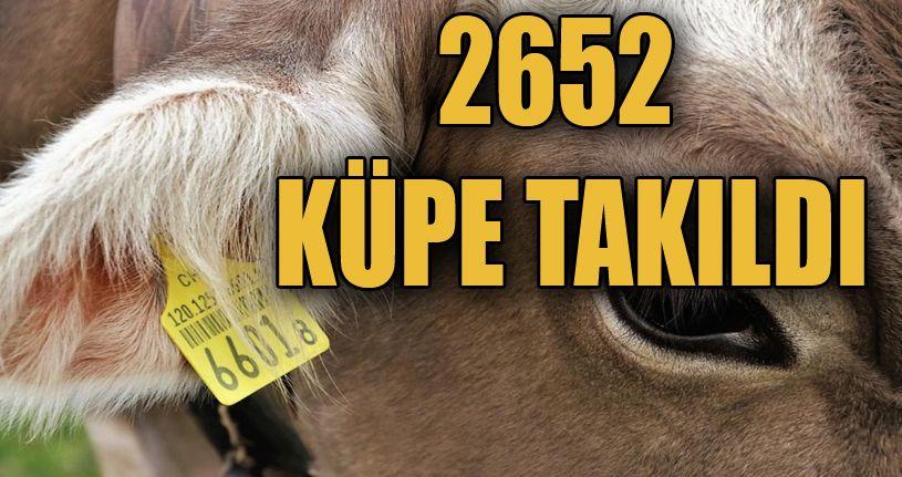 Düzce'de 2 bin 652 hayvana küpe takıldı