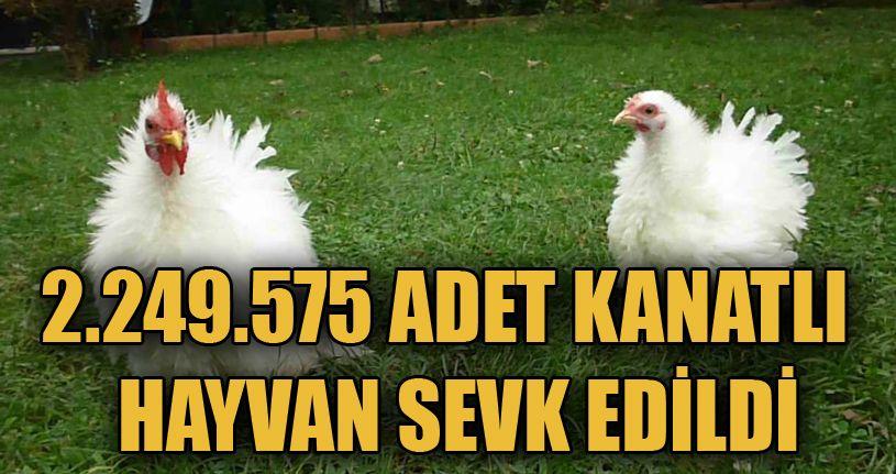 2 milyon kanatlı hayvan sevki yapıldı
