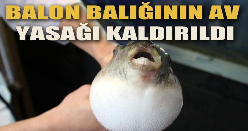 Balon balığının avlanma yasağı kaldırıldı