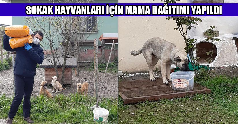 Şehrin Belirli Noktalarına Mama Bırakıldı