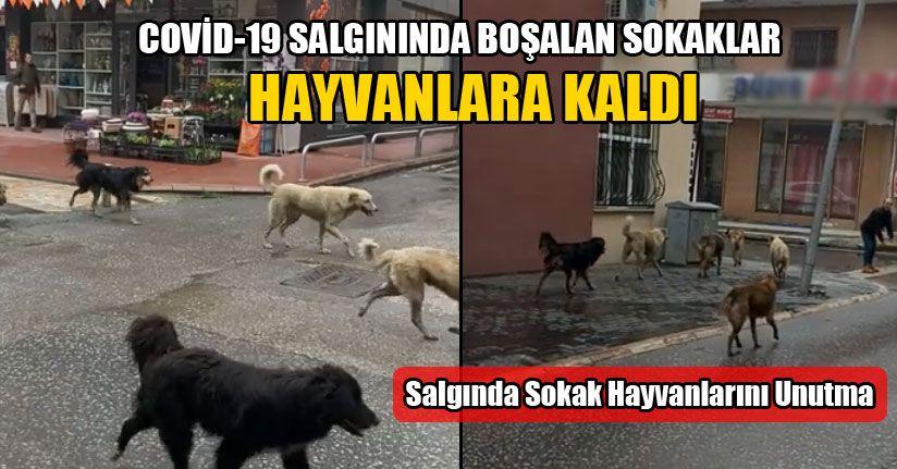 Salgında Sokak Hayvanlarını Unutma