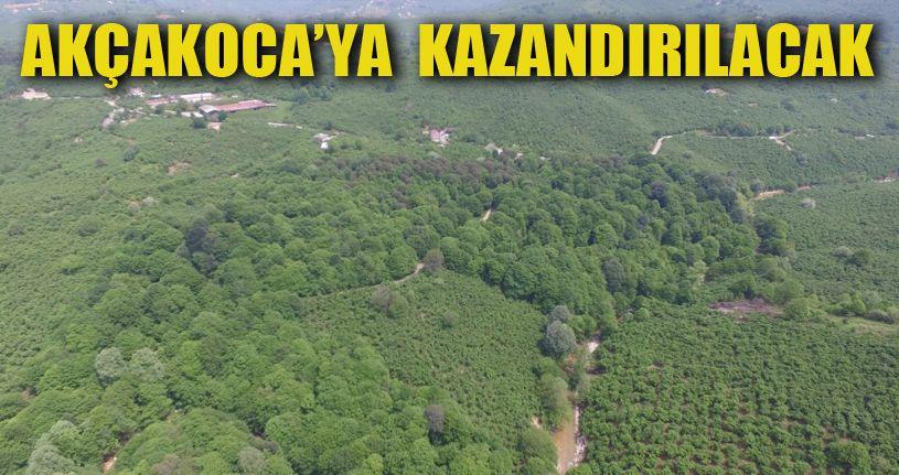 Kocaoluk ormanı gün yüzüne çıkıyor