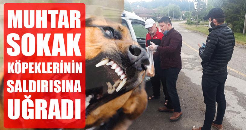 Köpekler Ekmek Dağıtmaya Çıkan Muhtara Saldırdı