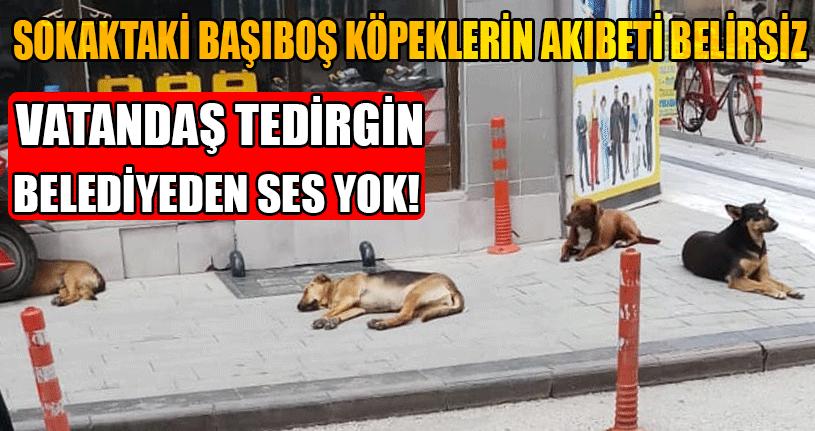 Sokaktaki Başıboş Köpeklerin Akıbeti Belirsiz