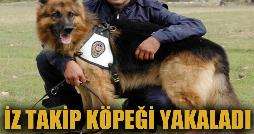 Hırsızlık şüphelisi 4 kişi, iz takip köpeğiyle yakalandı