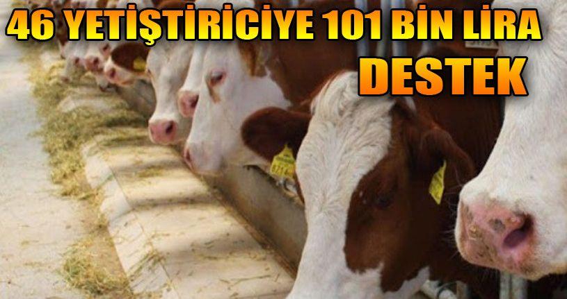 Düzceli çiftçilere 101 bin lira hayvan desteği verildi