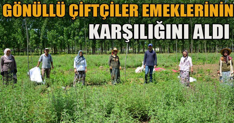 Gönüllü çiftçiler emeklerinin karşılığını aldı
