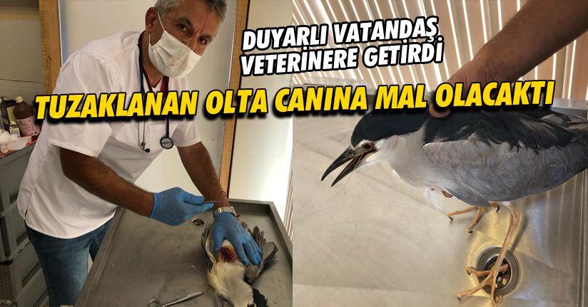 Tuzaklanan oltaya takılan Balıkçıl kuşu hayata döndürüldü