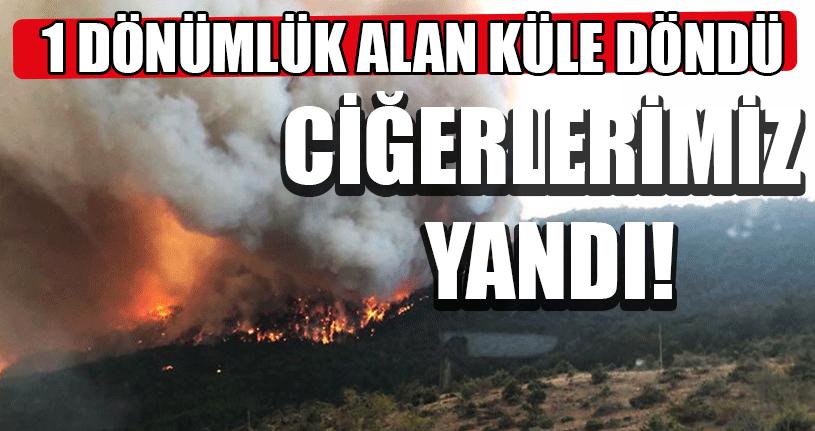 Düzce'de Orman Yangınları Arttı