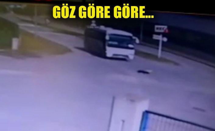 Yol ortasında duran köpeğin üzerinden minibüs geçti