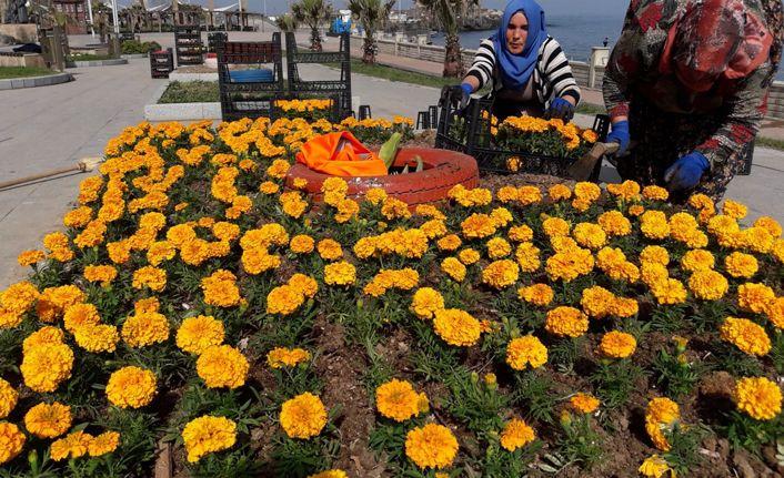 Tatil beldesi Akçakoca'da parklar mevsimlik çiçeklerle süsleniyor