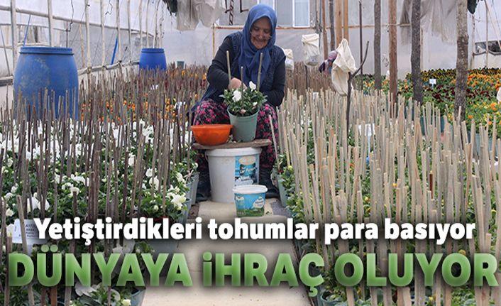 Bu köyün annelerinin yetiştirdiği çiçek tohumları para basıyor, dünyaya ihraç oluyor