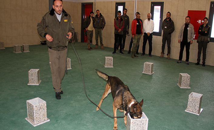 İstanbul Havalimanı'nda apron güvenliği özel köpeklere emanet
