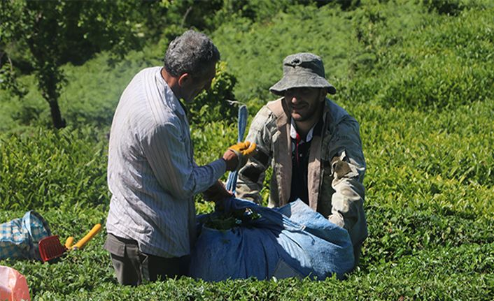 Yaş çay taban fiyatı 3 TL 3 Kuruş olarak açıklandı