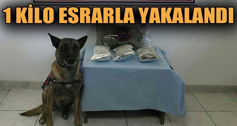 1 kilo esrarla yakalanan şahıs tutuklandı