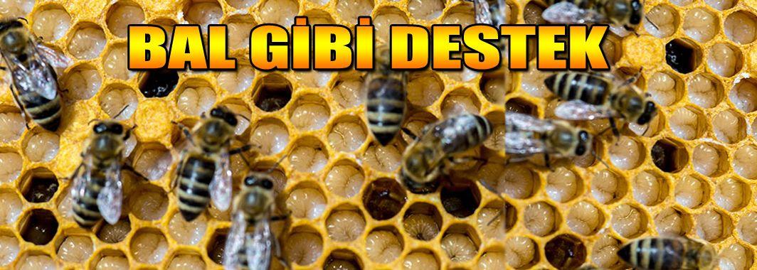 Arıcılara Hibe Desteği