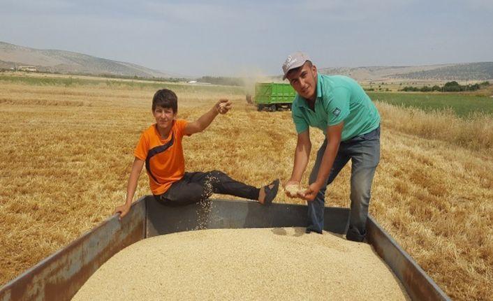 Arpa ve buğdayda yüksek rekolte çiftçiyi sevindirdi