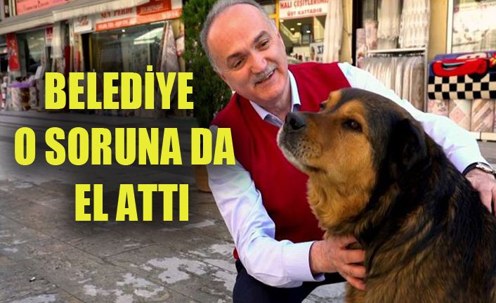 Günde 10 köpek tedavi edilecek