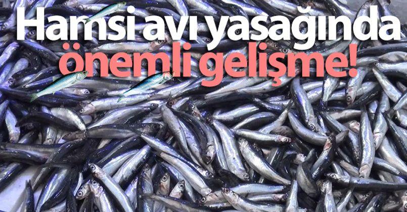 İstanbul'un doğusu ile Kocaeli sınırlarında ticari hamsi avcılığı yasağı kaldırıldı