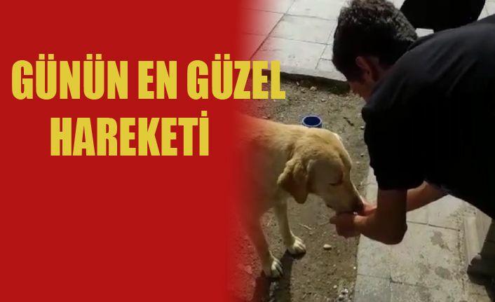Sokak köpeğine elleriyle su verdi