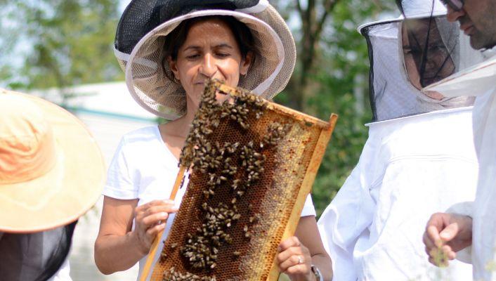 Arılardan gelen şifa: Propolis