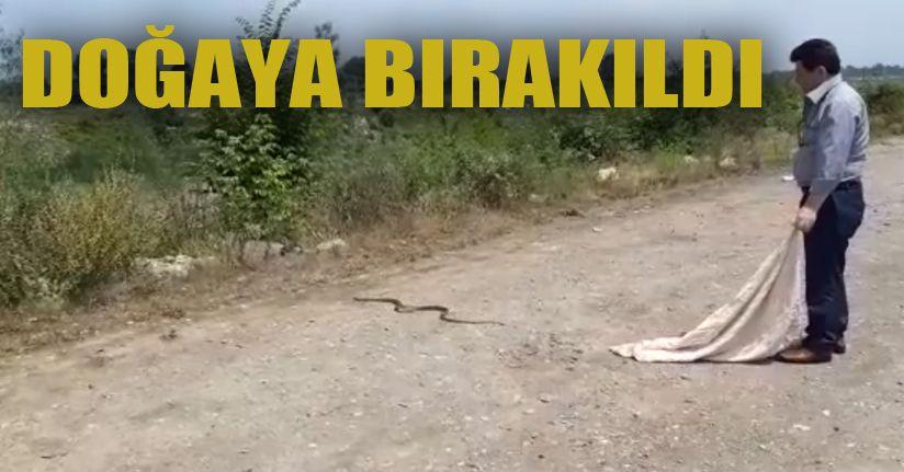 Evde yakalanan yılan doğaya salındı