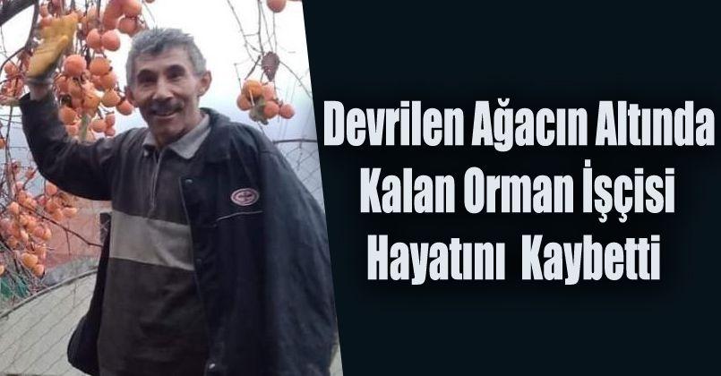 Devrilen ağacın altında kalan orman işçisi hayatını kaybetti