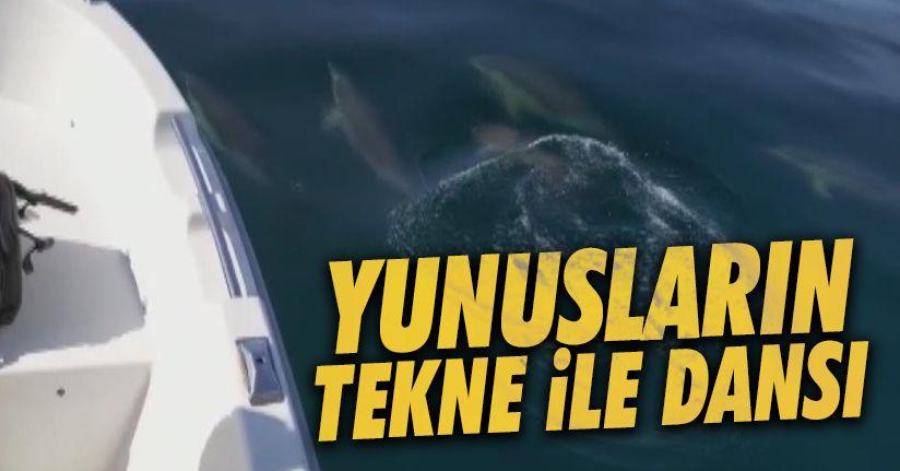 Yunuslar denizde tekneye eşlik etti
