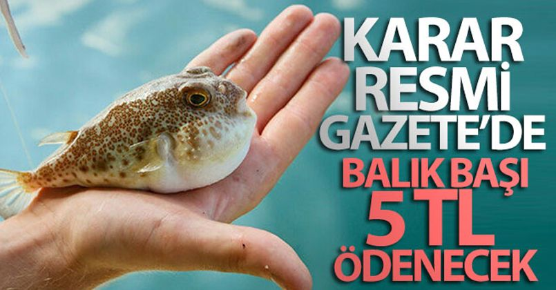 Balon balığı avcılığının desteklenmesine ilişkin karar Resmi Gazetede yayımlandı