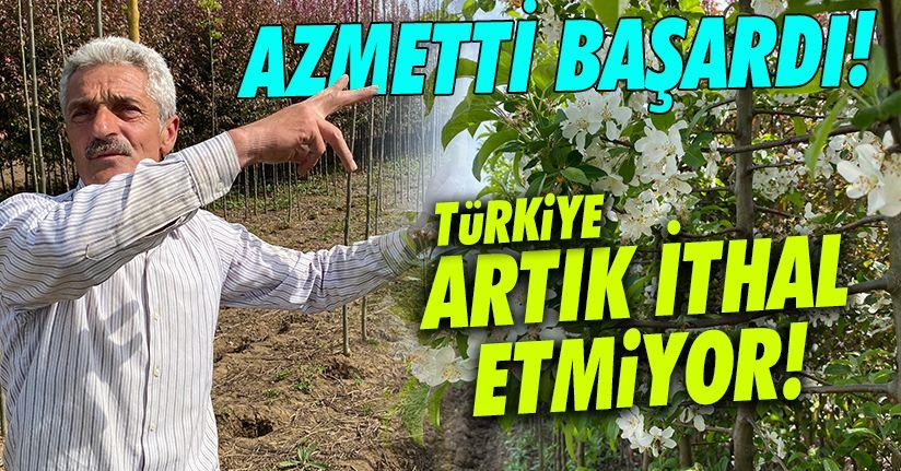 Hollanda'dan ithal edilen süs ağaçları artık Türkiye'de yetişiyor