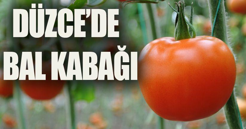 Doğu Marmara'da en çok domates üretildi