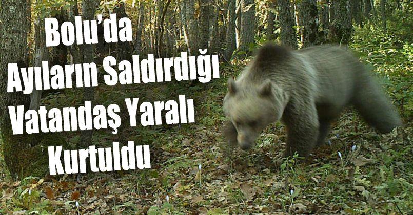 Bolu'da ayıların saldırdığı vatandaş yaralı kurtuldu