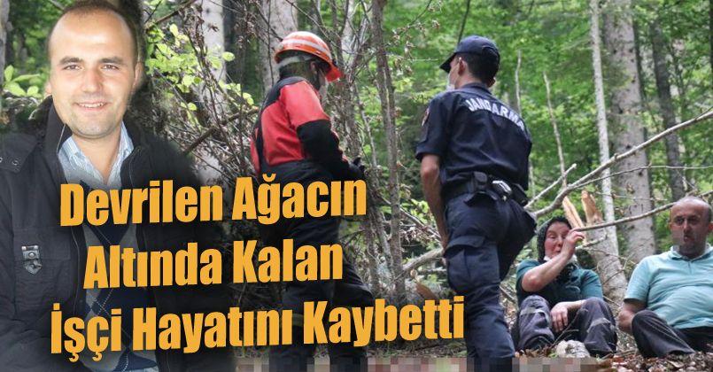 Devrilen ağacın altında kalan işçi hayatını kaybetti