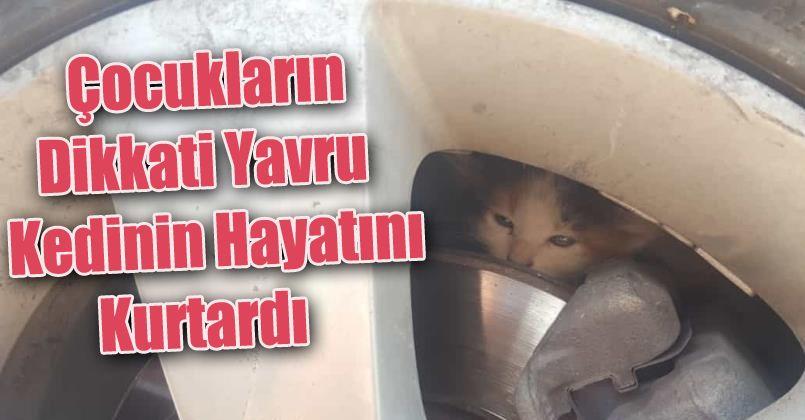 Çocukların dikkati yavru kedinin hayatını kurtardı