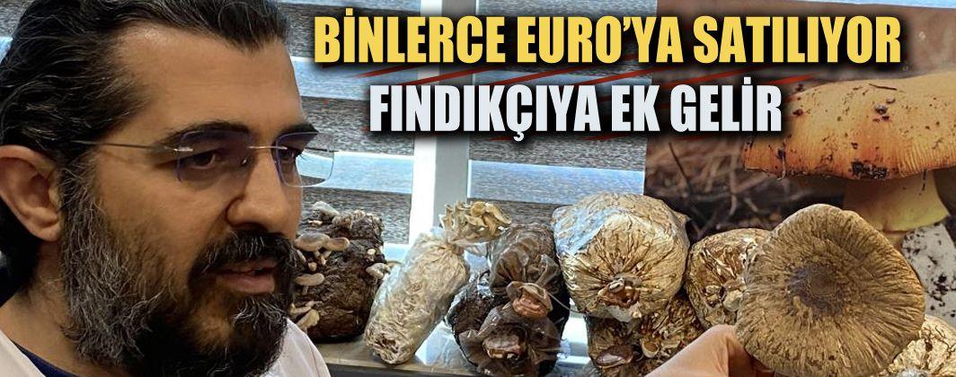Avrupa'nın gözdesi Trüf Mantarı 'kara elmas', Türkiye'de bu yöntemle üretilecek