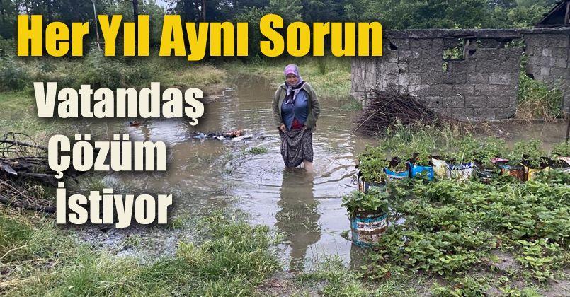 Yoğun yağmurda dereler taşınca tarım arazilerini su altında kaldı
