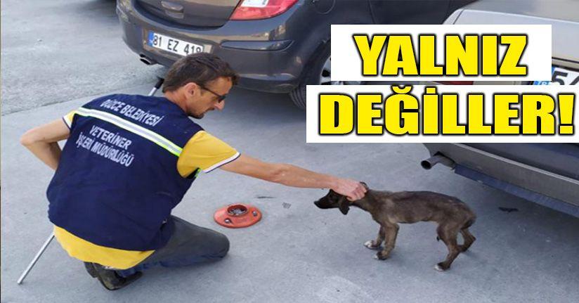 Sokak hayvanlarının rehabilitasyon ve tedavi işlemleri gerçekleştiriliyor