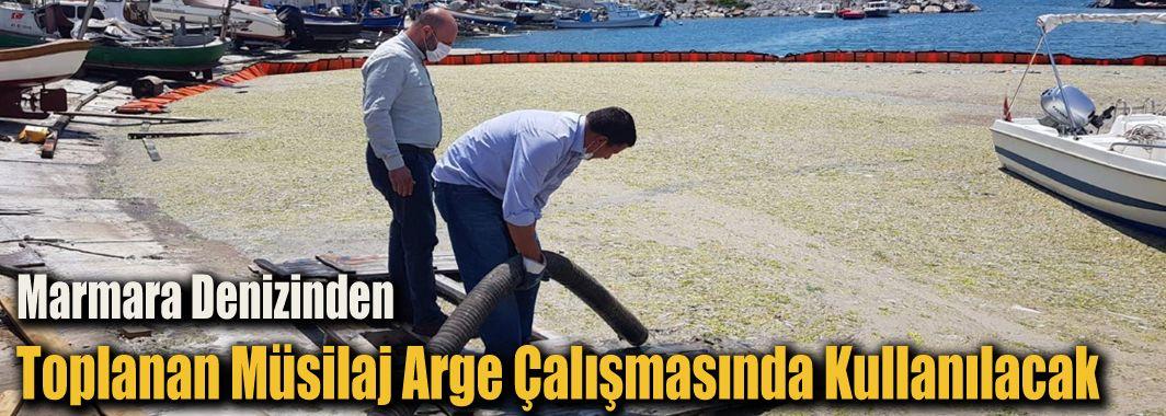 Marmara Denizinden Toplanan Müsilaj Arge Çalışmasında Kullanılacak