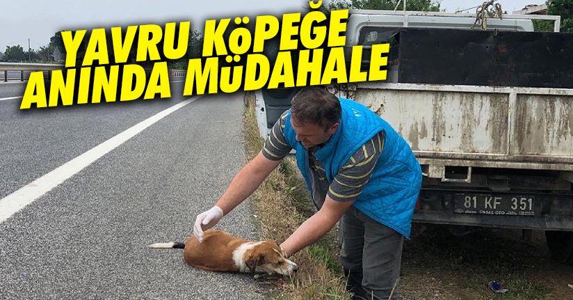 Araç çarpan köpeğe anında müdahale