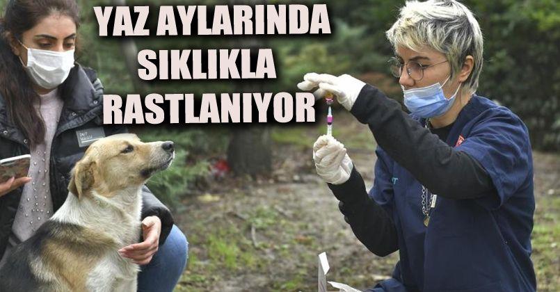 2 bin 131 köpeğe kuduz aşısı uygulandı