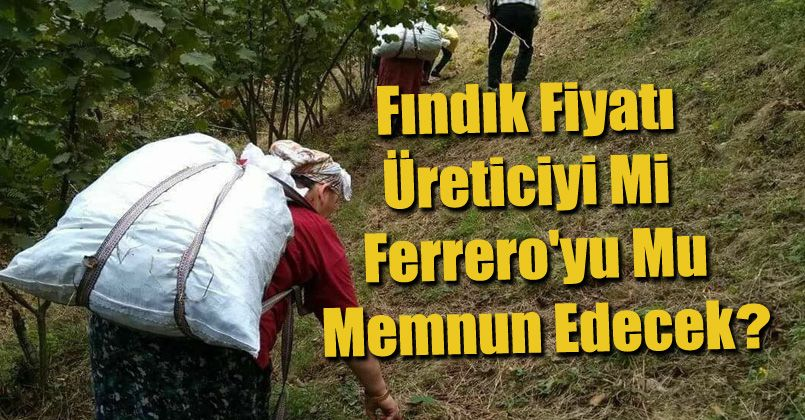 Fındık fiyatı üreticiyi mi Ferrro'yu mu memnun edecek ?