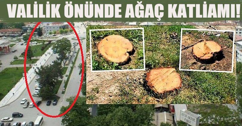 Valilik Önünde Ağaç Katliamı