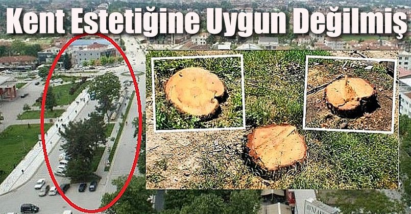 O Ağaçların Kesilmesini Müdür Bey İstemiş