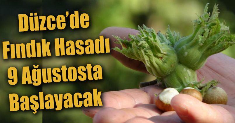 Düzce'de fındık hasadı 9 Ağustosta başlayacak