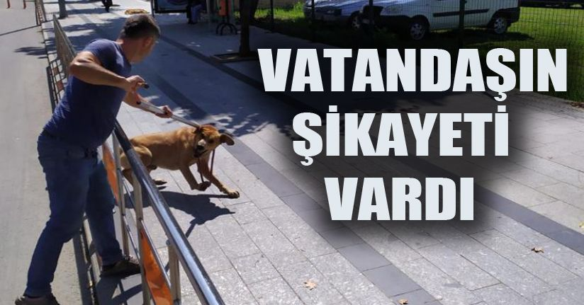 870 Köpek Toplandı