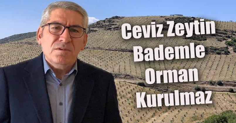 Ceviz Zeytin Bademle Orman Kurulmaz
